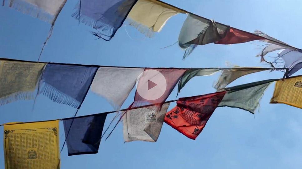 Screenshot aus dem Teaser Zengarden